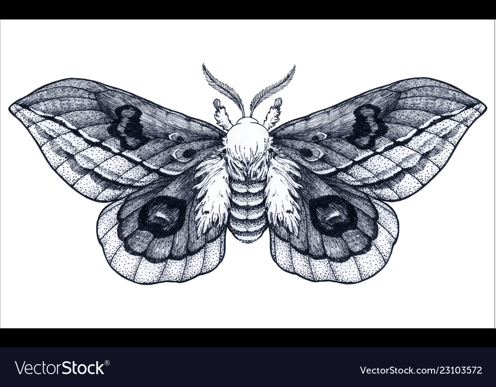 8e9405a17 Hand drawn butterfly tattoo beautiful moth Vector Image