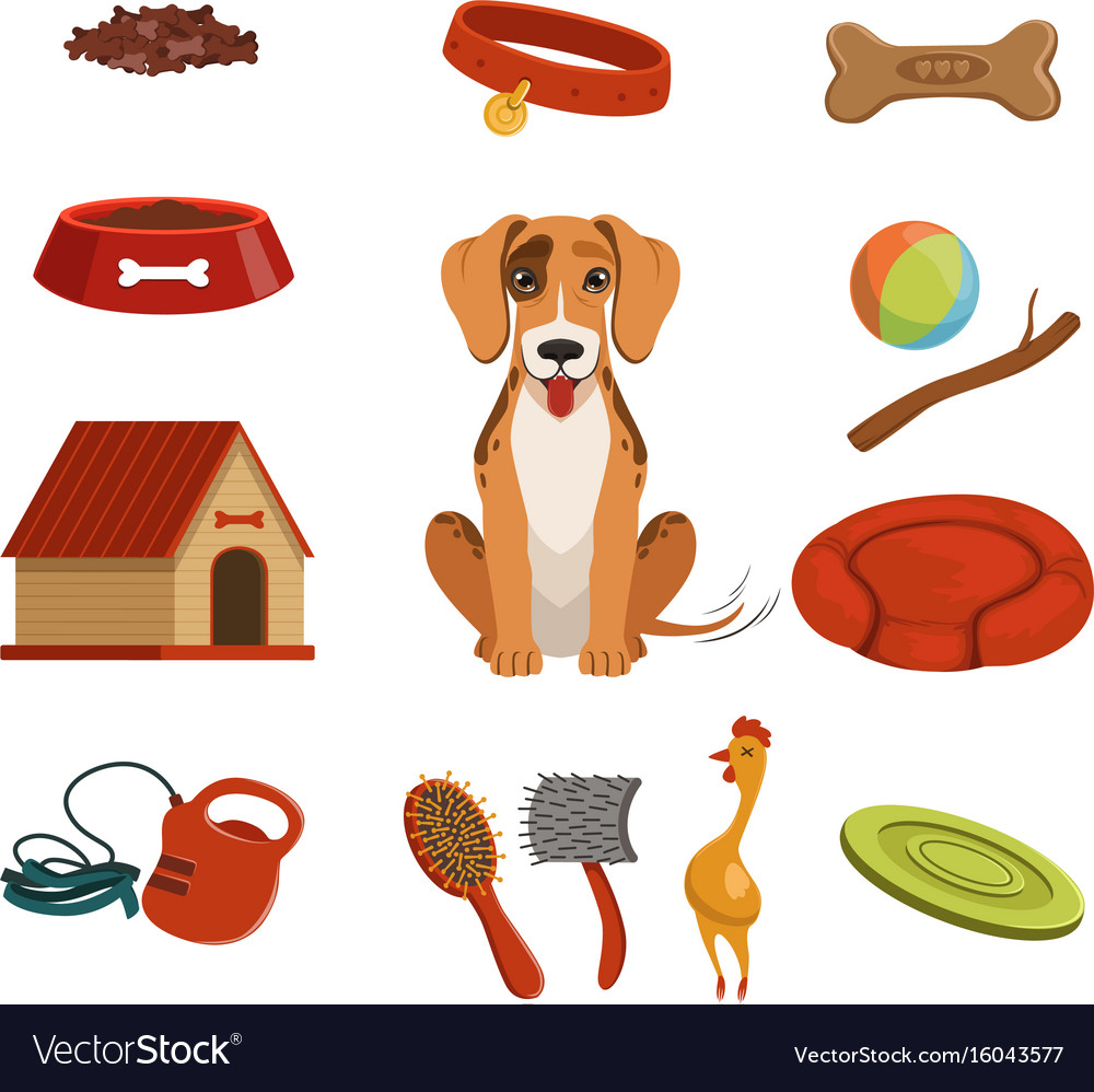 Different accessories for domestic pet dog in