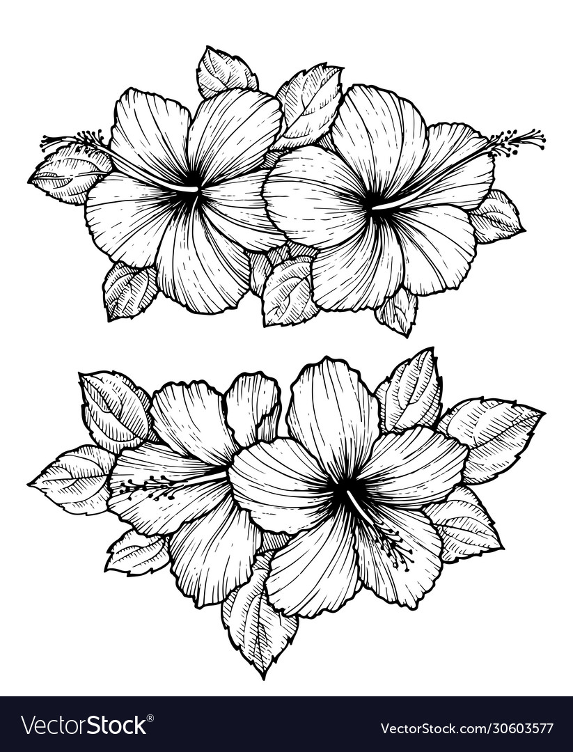 Hand Drawn Tropical Hibiscus Flower Bouquet Vector Image