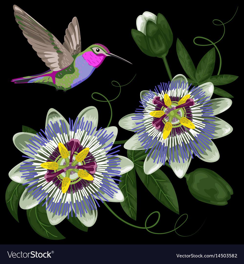 Hummingbird and passiflora