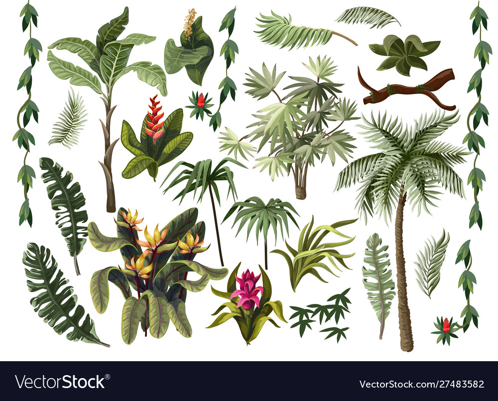 Jungle trees and flowers isolated