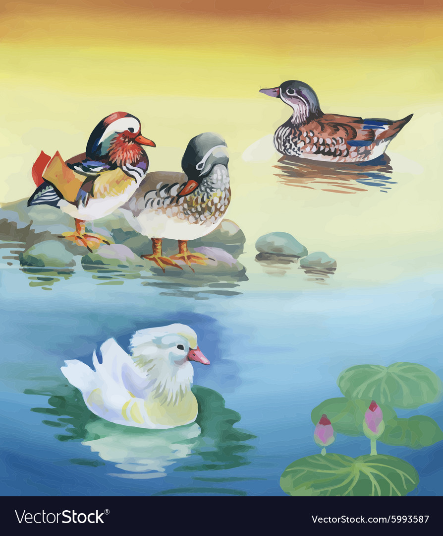 Geese flock swimming on pond watercolor