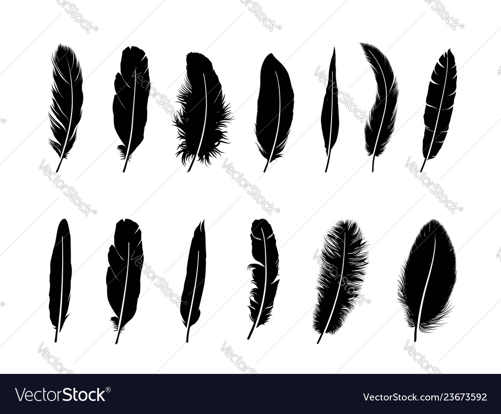 Feather set different birds feathers silhouette