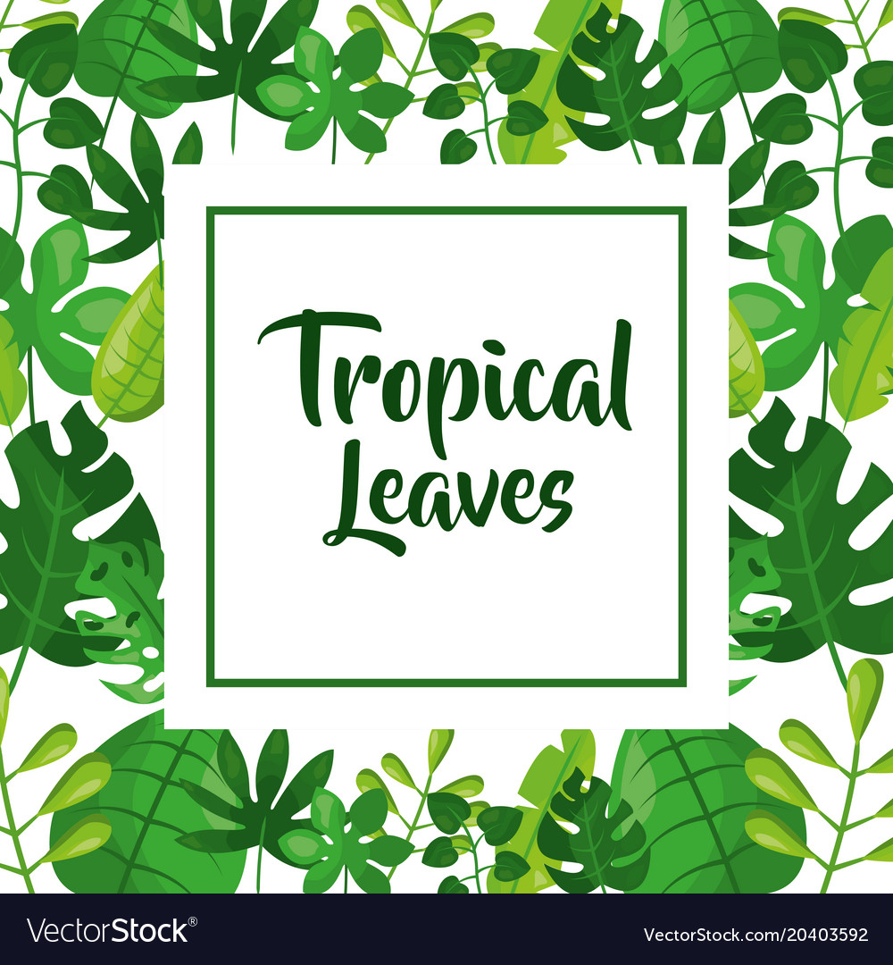 Tropical leaves decoration vector image