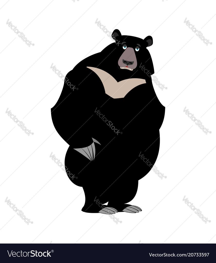 Himalayan bear sad emotion sorrowful wild animal vector image