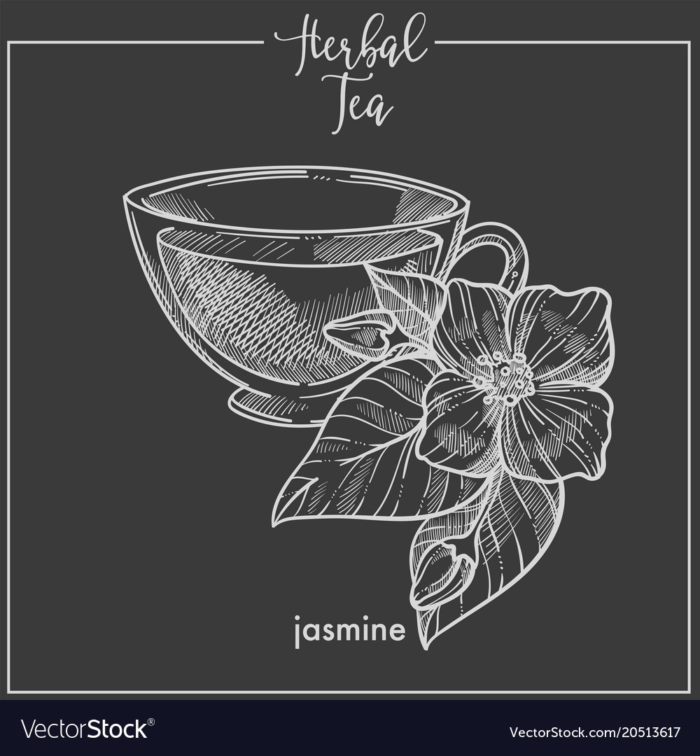 Herbal tea with fragrant jasmine in glass cup vector image