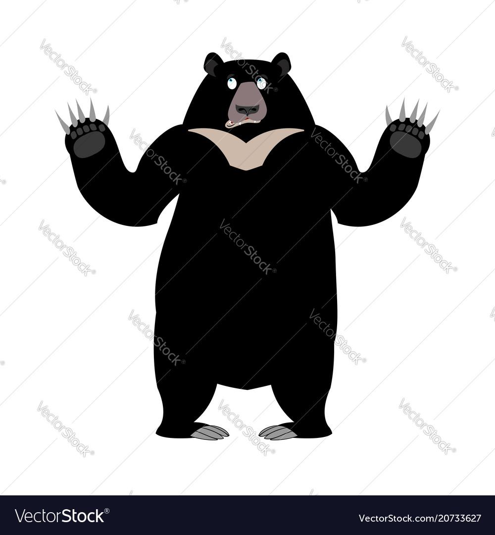 Himalayan bear surprise emotion wonderl wild