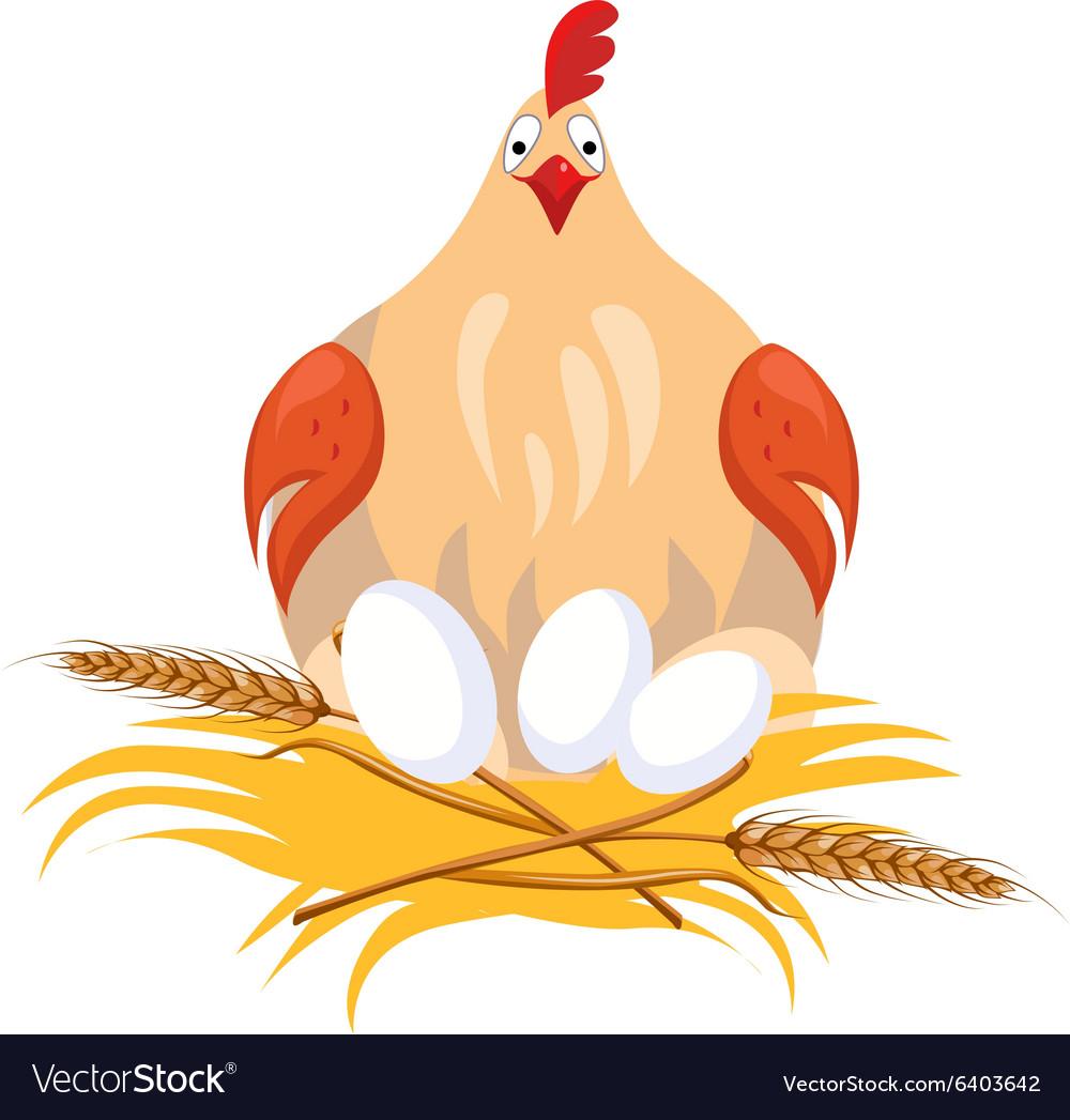 Hen in Nest Sitting on Eggs