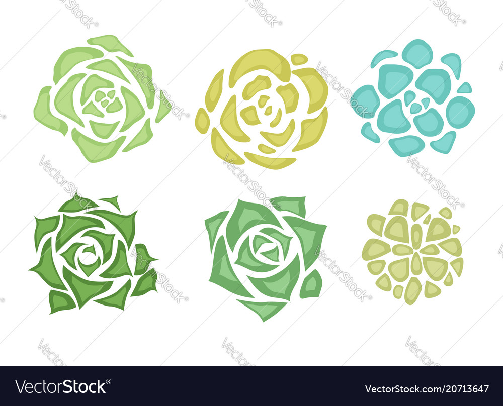 Set of flat succulents with a top view on a white vector image