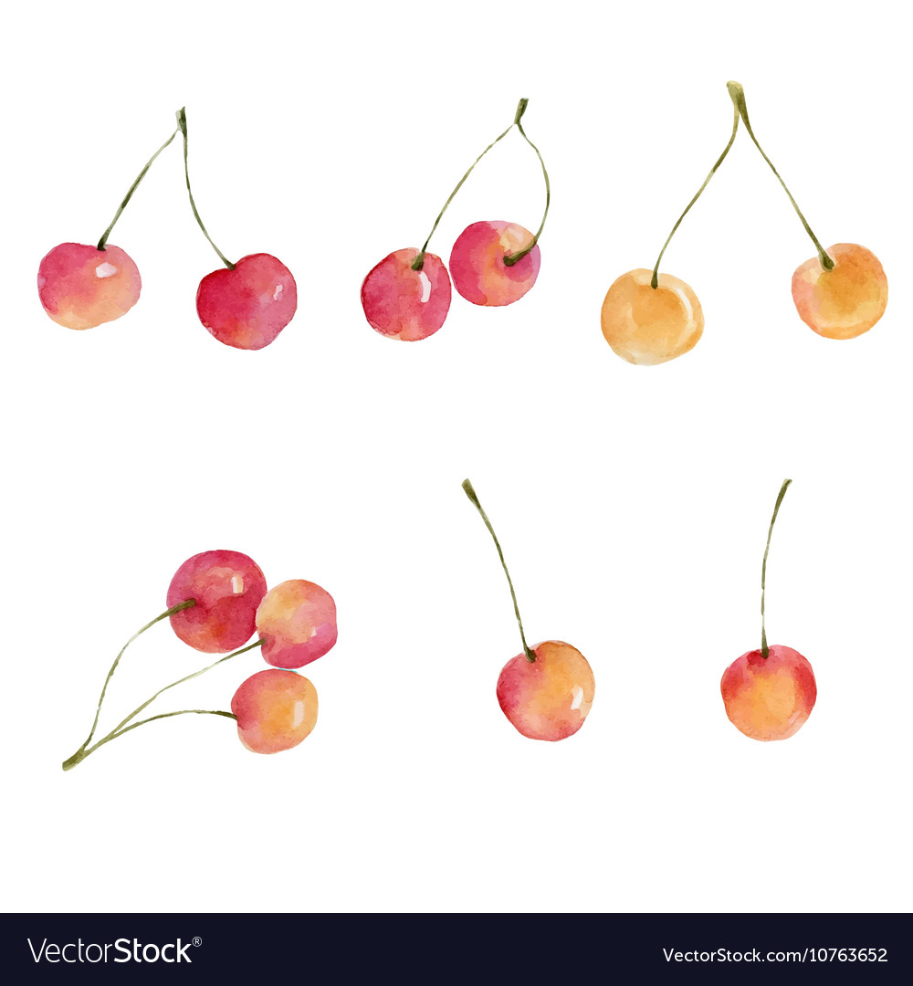 Watercolor cherries isolated on white background vector image
