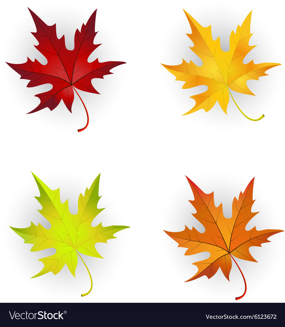 Autumn Maple Leaves Set