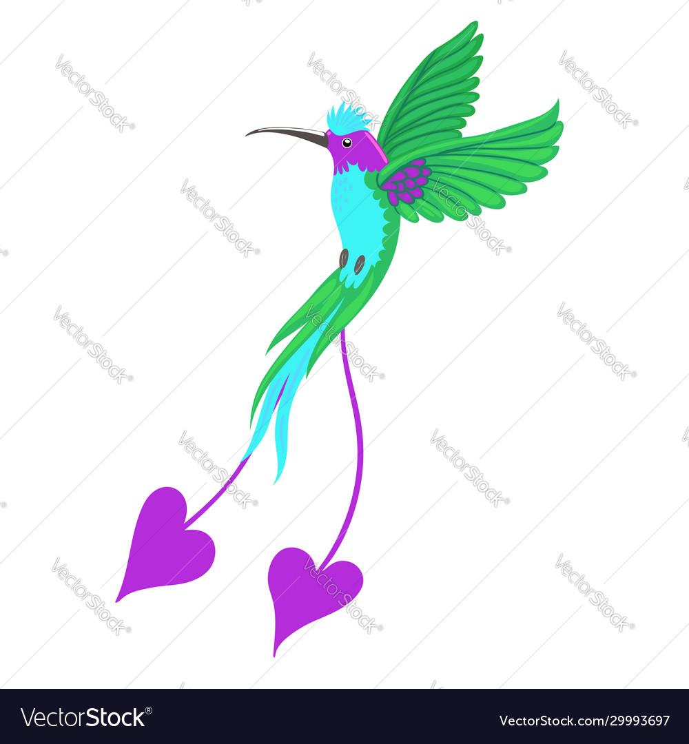 Hummingbird bird isolate on a white background