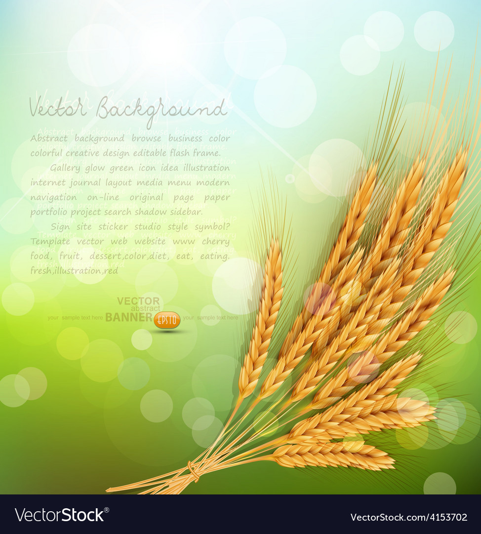 Background With Gold Ears Of Wheat And Sun Rays Vector Image
