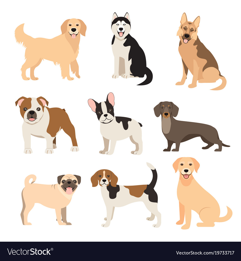 Image of: Drawing Vectorstock Flat Style Dogs Collection Cartoon Dogs Breeds Vector Image