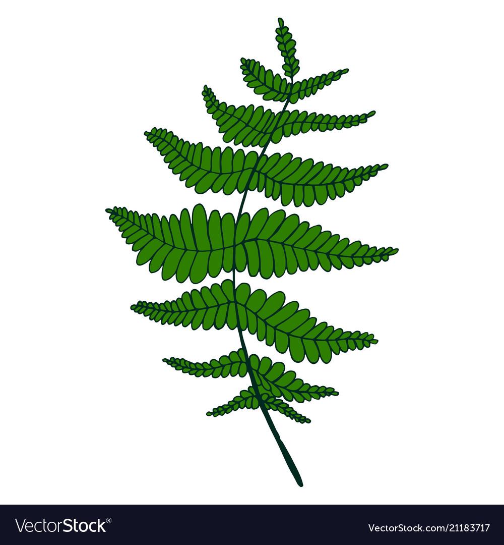 Green fern leaf isolated pattern