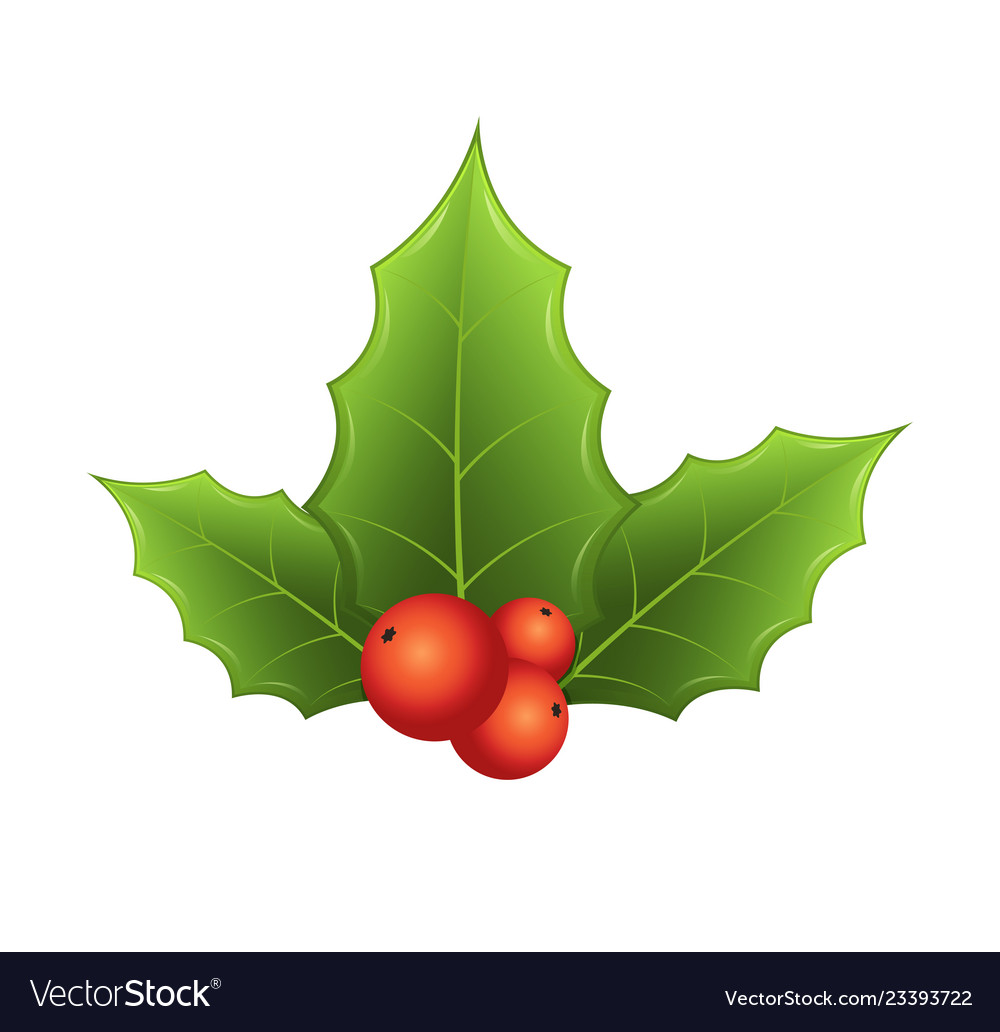 Twig of holly with leaves and red berries