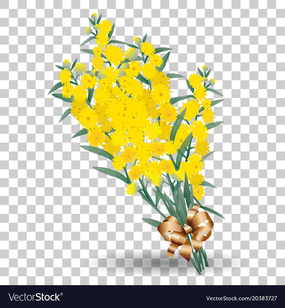 Yellow Mimosa Flower Branch Symbol Of Spring Vector Image