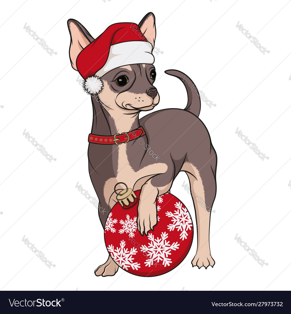 Color image a small dog a brown chihuahua