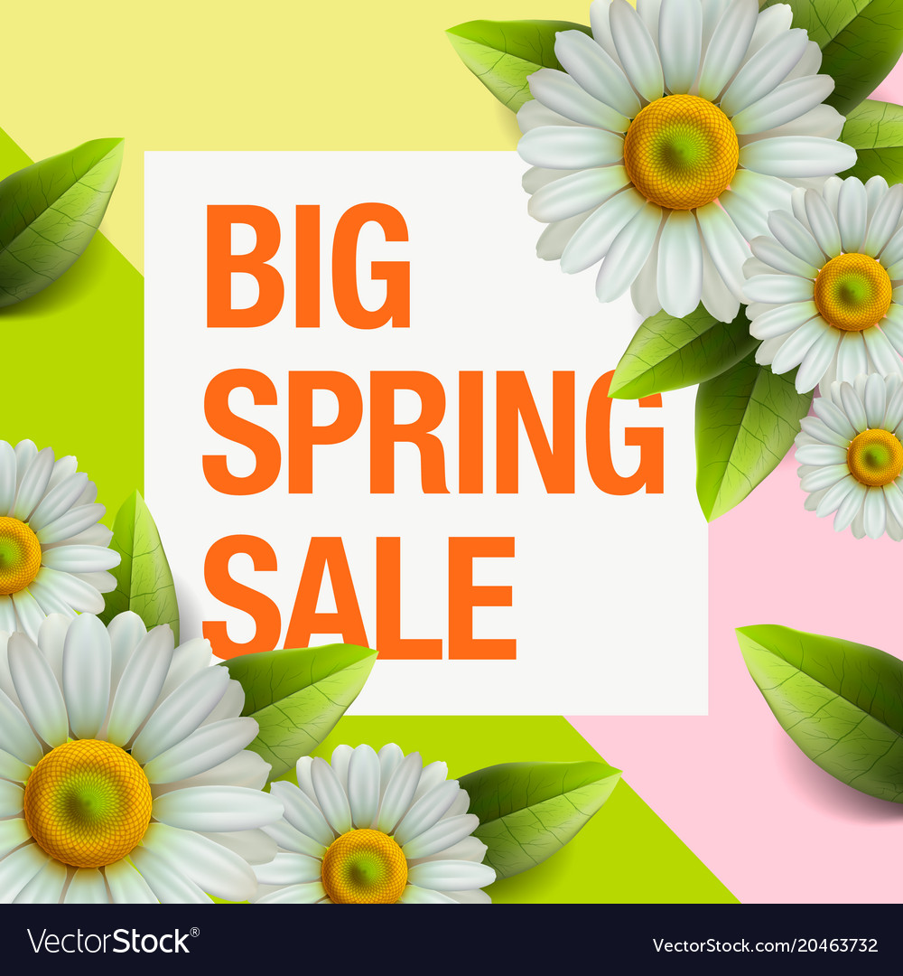 Spring sale design with colorful flowers daisy vector image