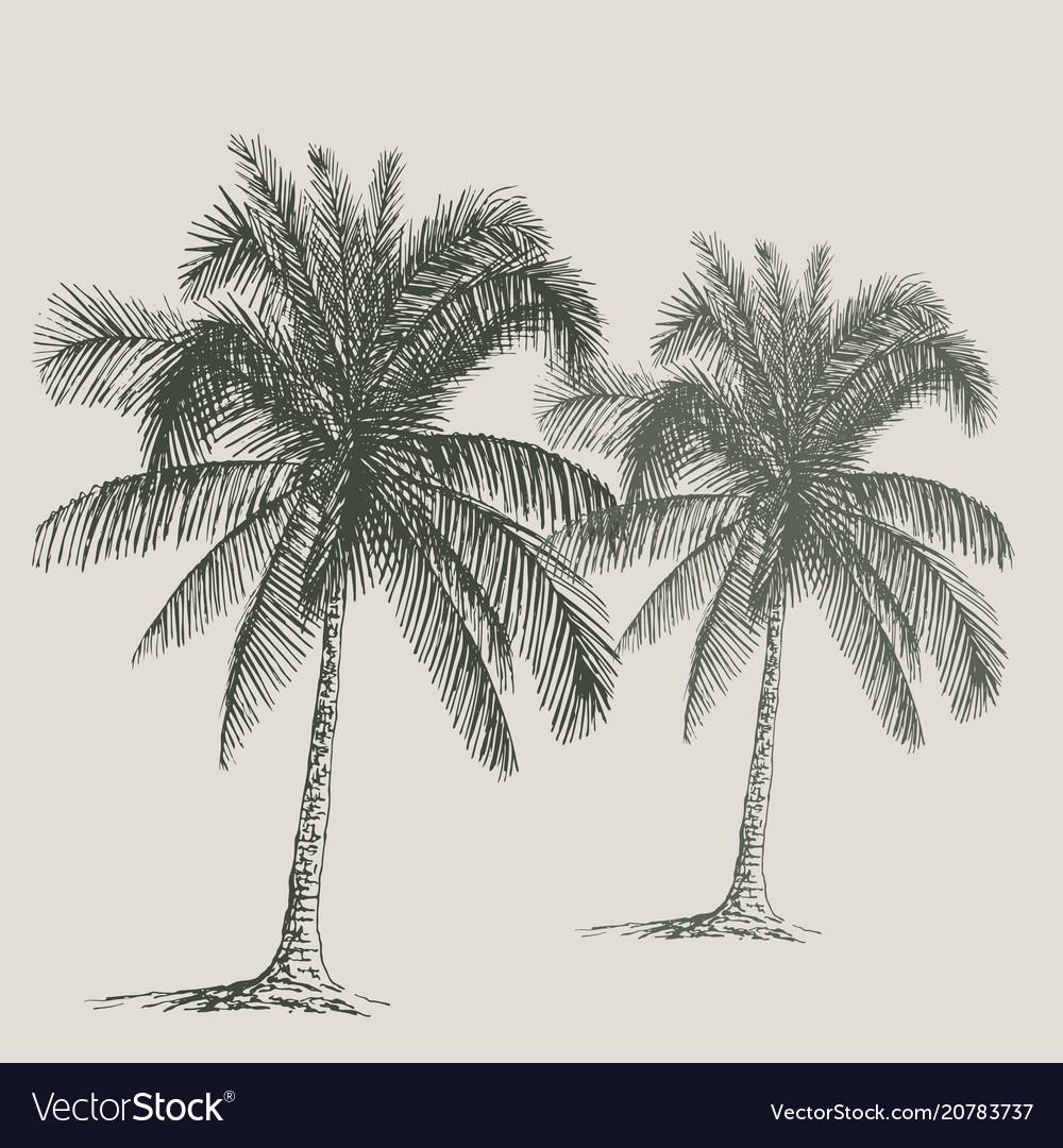 Palm sketch hand drawn