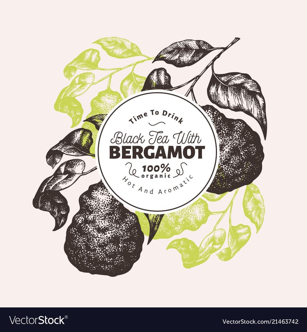 Bergamot branch design template kaffir lime frame