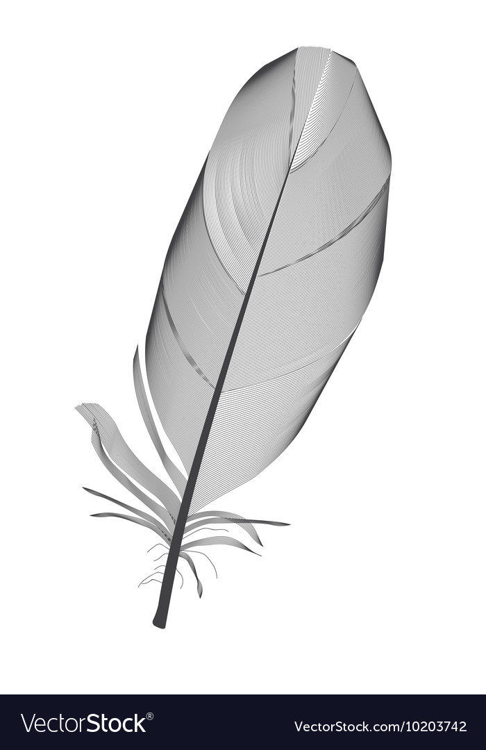 Black Bird Feather Drawn in vector image