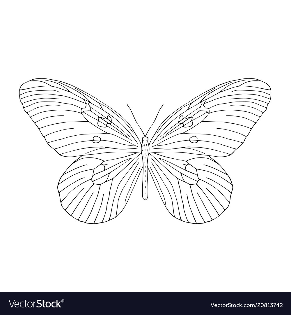 Hand drawn butterfly black and white