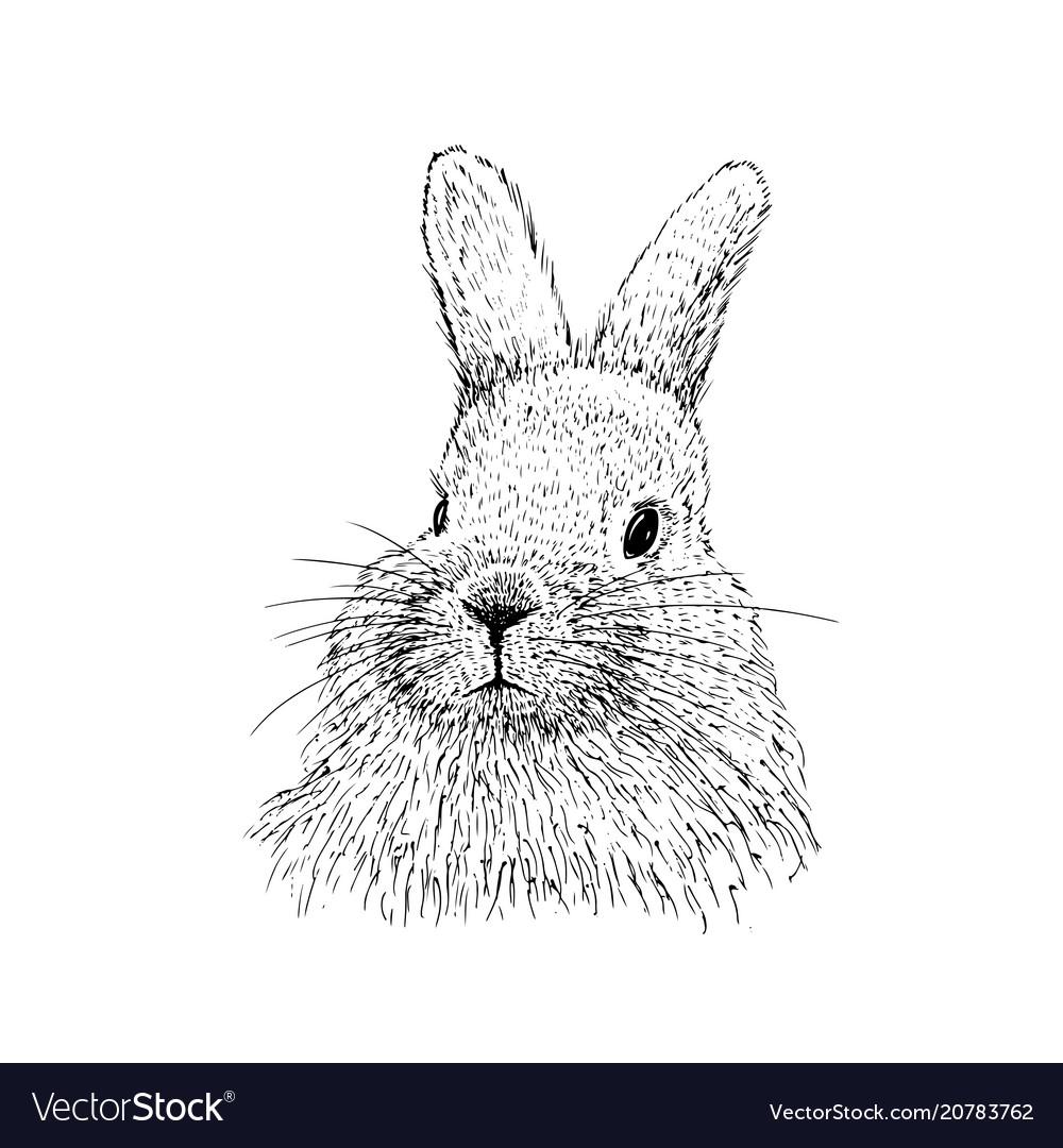 Rabbit sketch hand drawn
