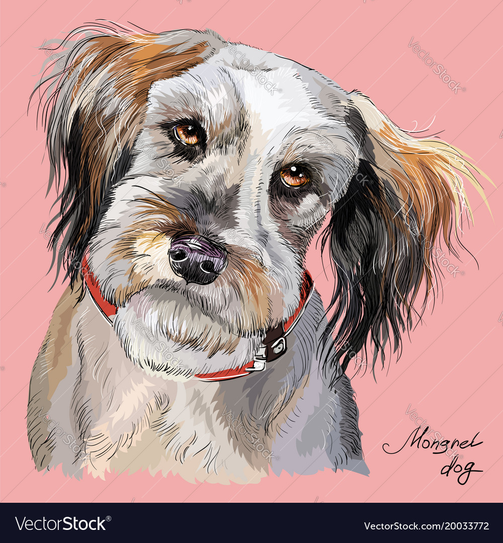 Fluffy dog colorful hand drawing portrait