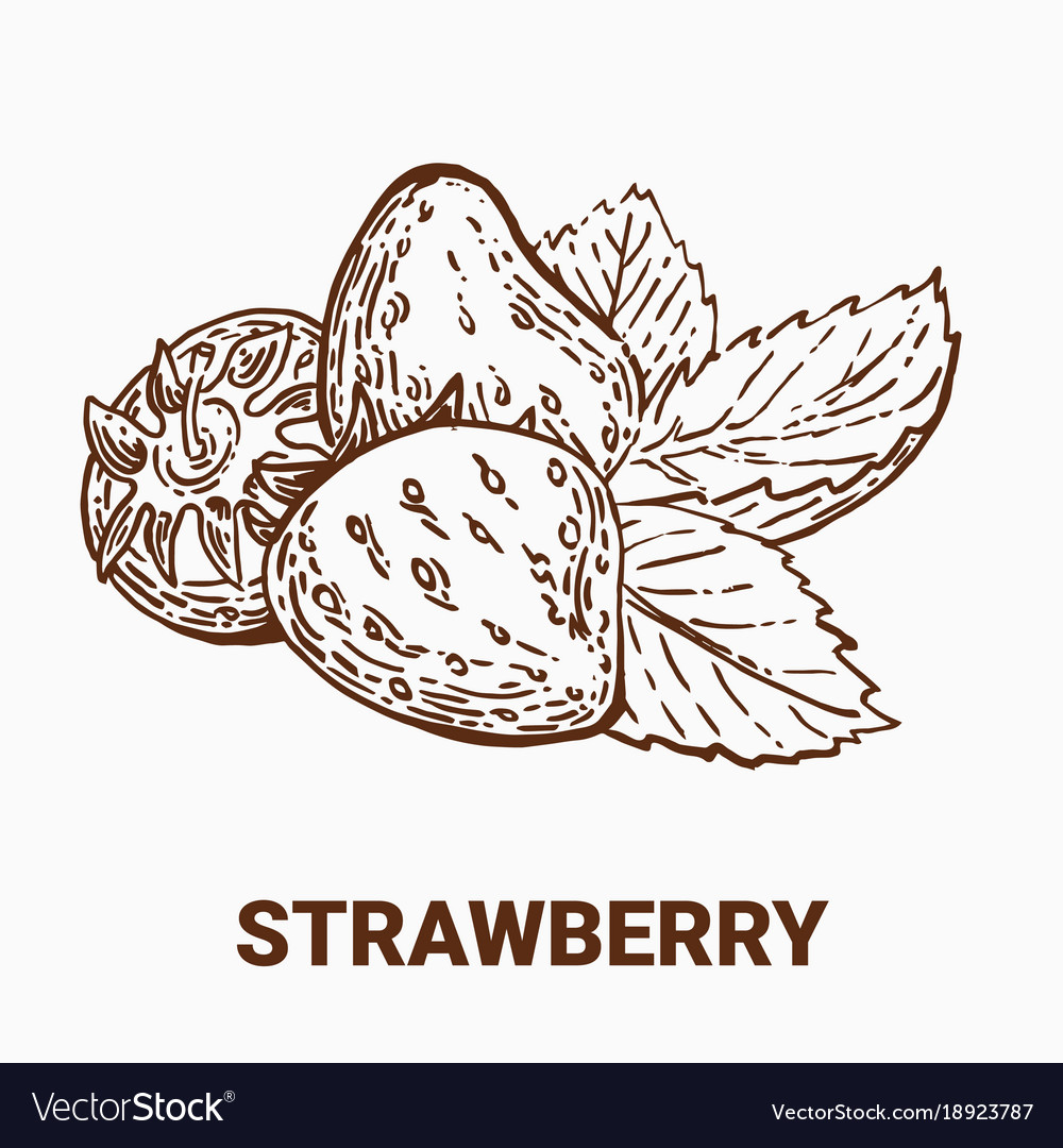 set of drawing strawberry hand draw royalty free vector