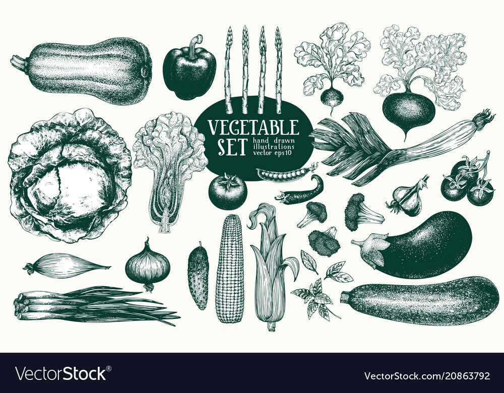 Vegetables hand drawn set