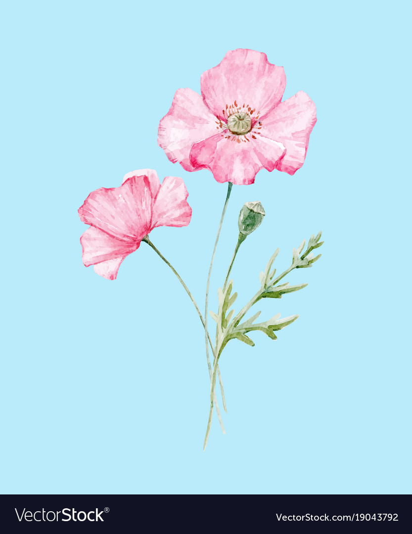 Watercolor Poppy Flower Royalty Free Vector Image