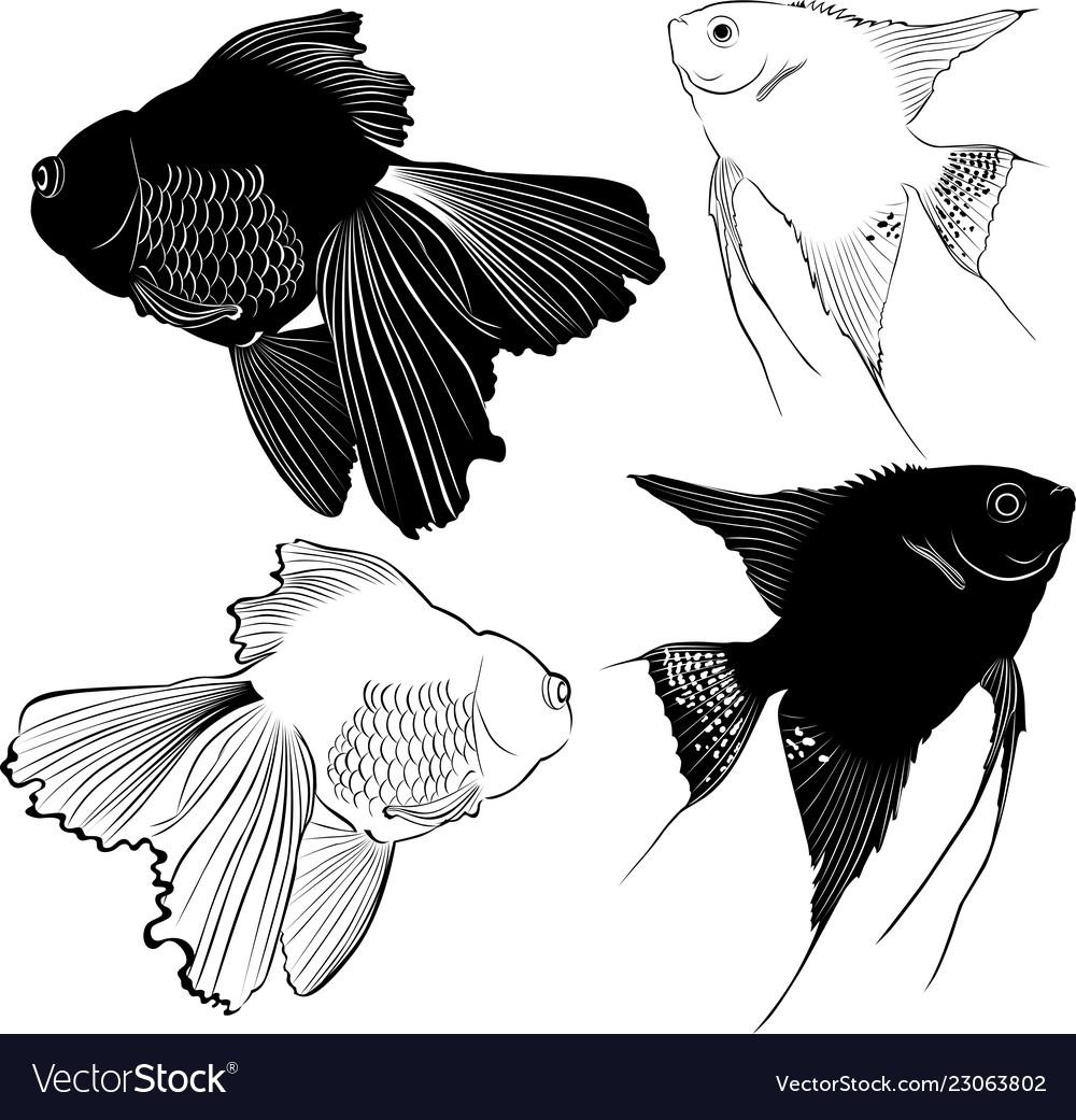 Set Of Aquarium Fish Royalty Free Vector Image