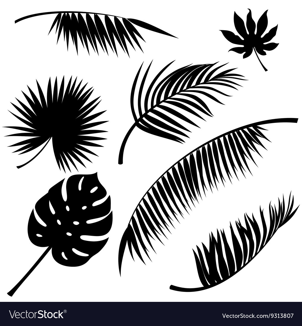 Tropical Leaves Royalty Free Vector Image Vectorstock Autumn leaves, leaves background, maple leaves. vectorstock