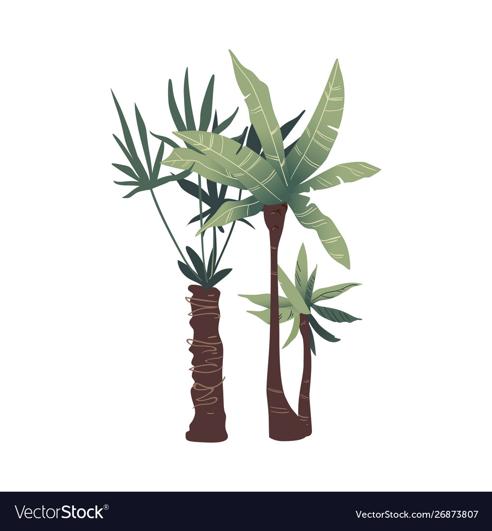 Two tropical green palm trees with leaves