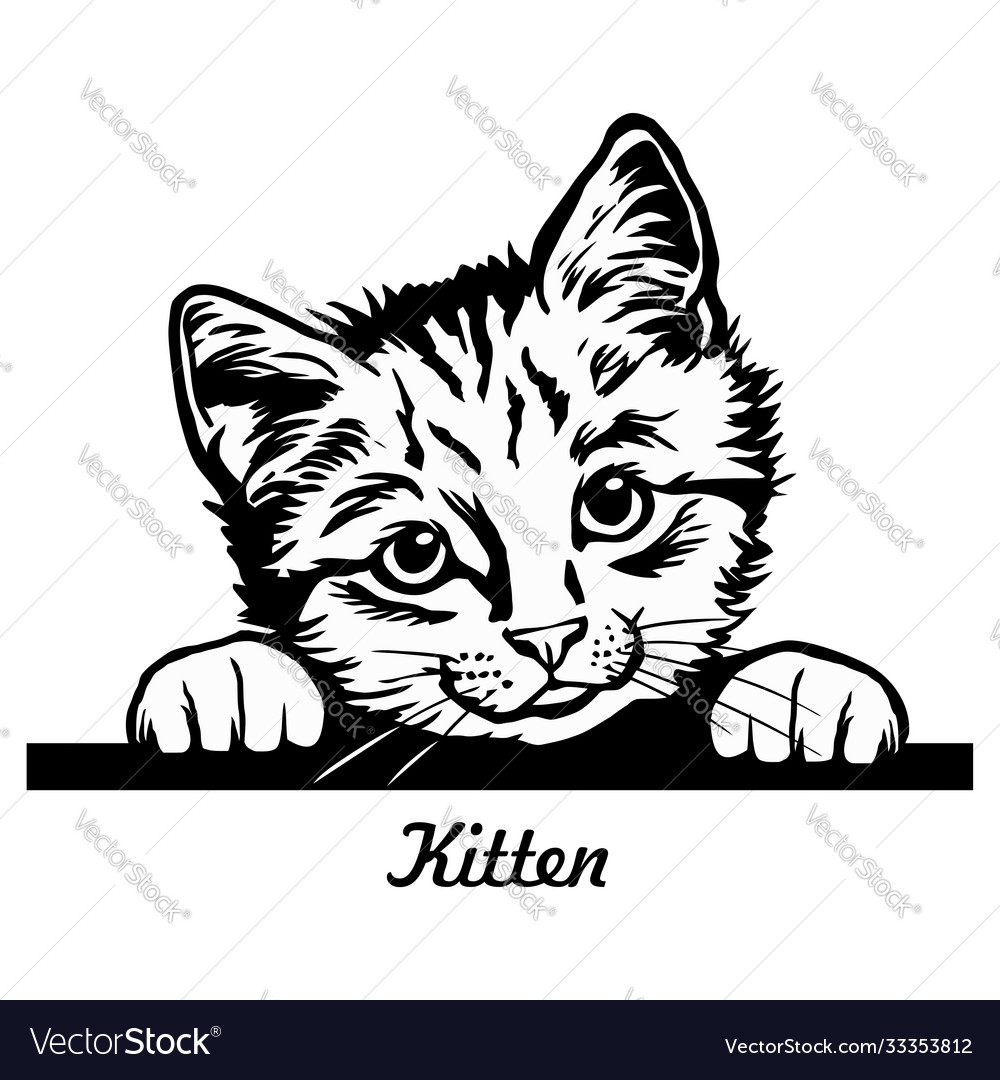 Peeking kitty - cheerful kitty out - cat