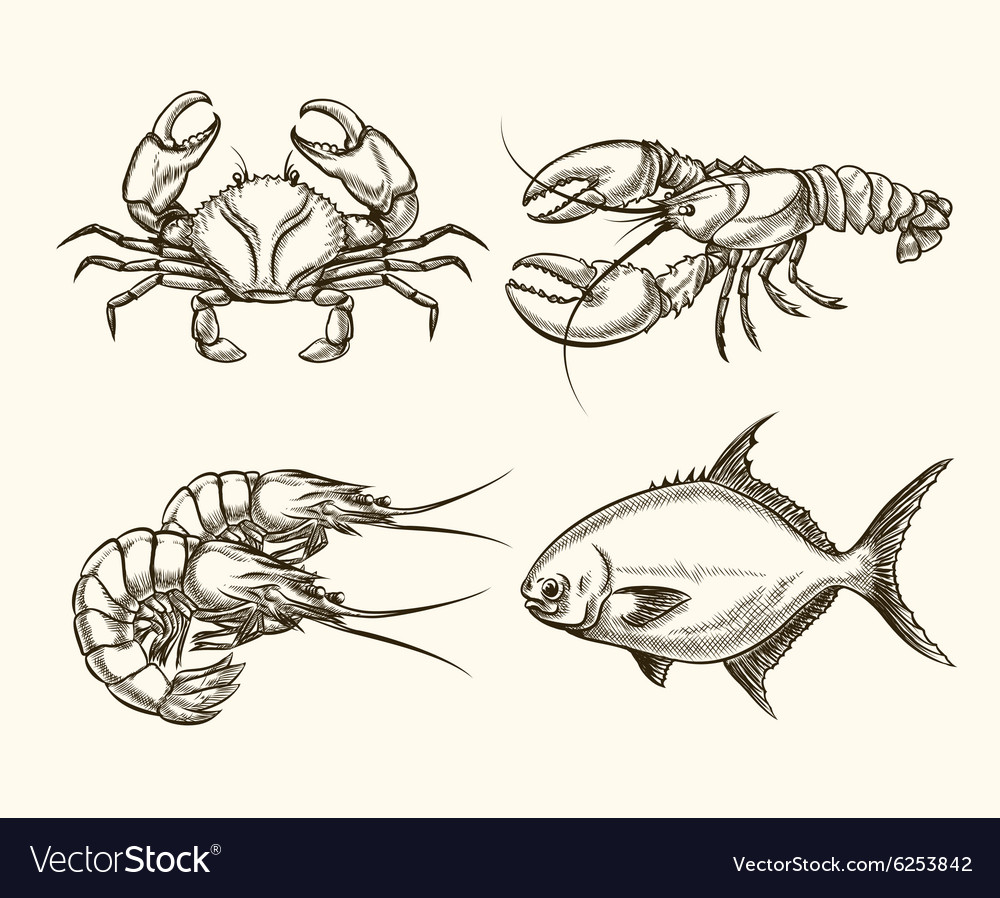 Seafood in hand drawn style