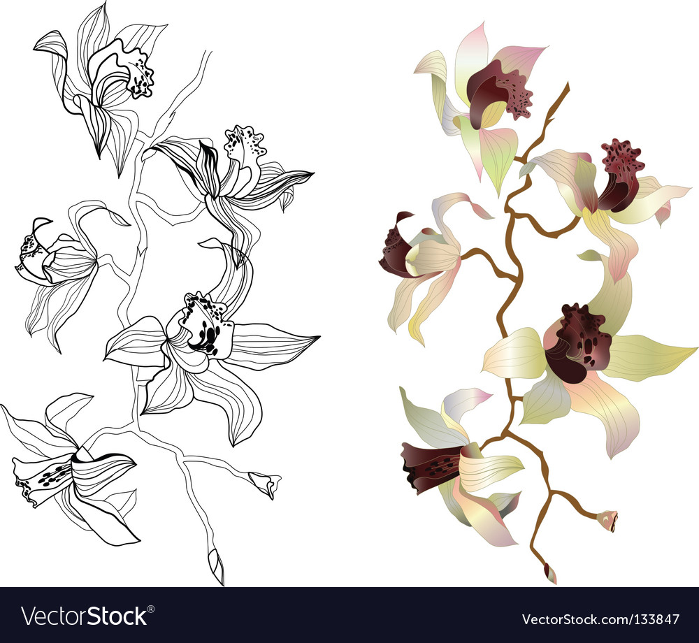 Orchid branches
