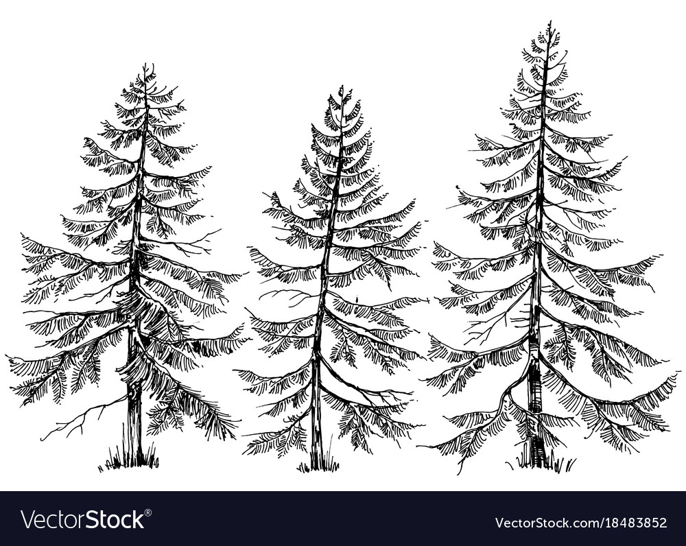 Pine trees collection hand drawn christmas trees Vector Image