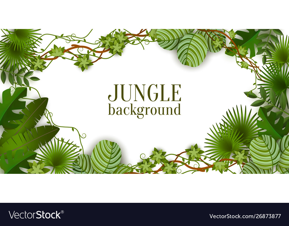 Tropical jungle exotic lianas vine and palm leaves