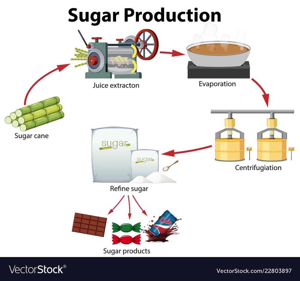 a sugar production diagram royalty free vector image Diagram of Sugar Macromolecule a sugar production diagram vector image