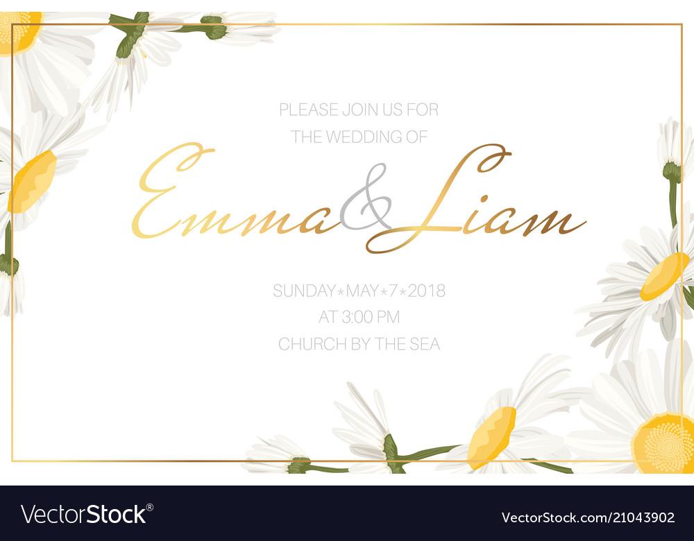 Daisy Chamomile Flowers Wedding Invitation Card Vector Image