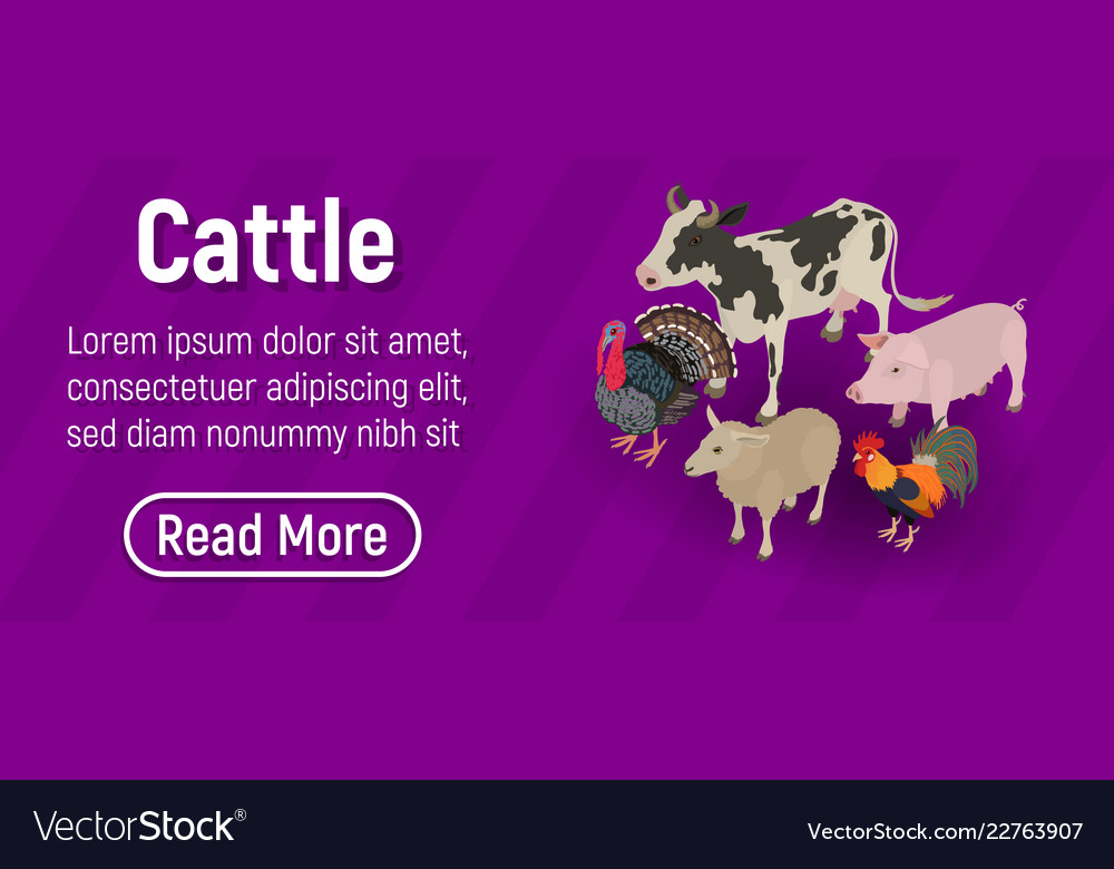 Cattle Concept Banner Isometric Style Royalty Free Vector
