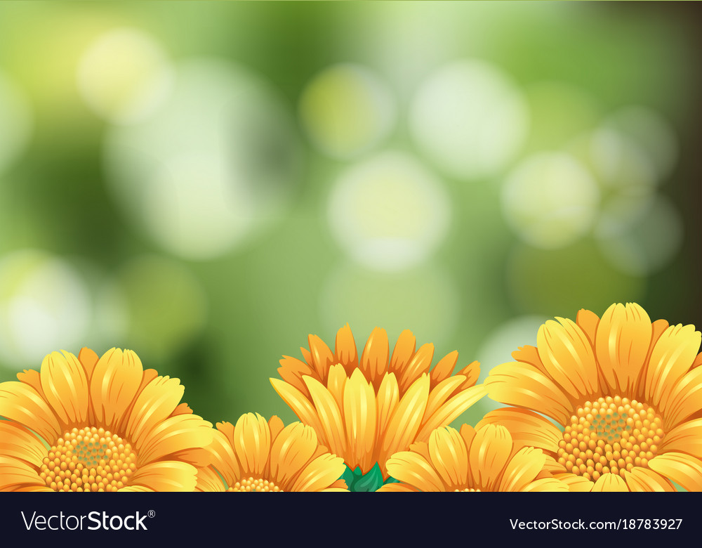 background scene with yellow flowers in garden vector image vectorstock