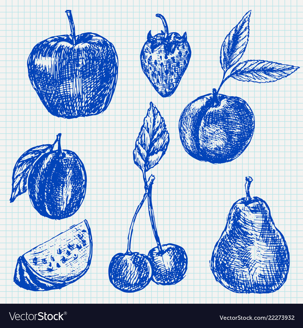 Fruits blue hand drawn sketch on lined paper