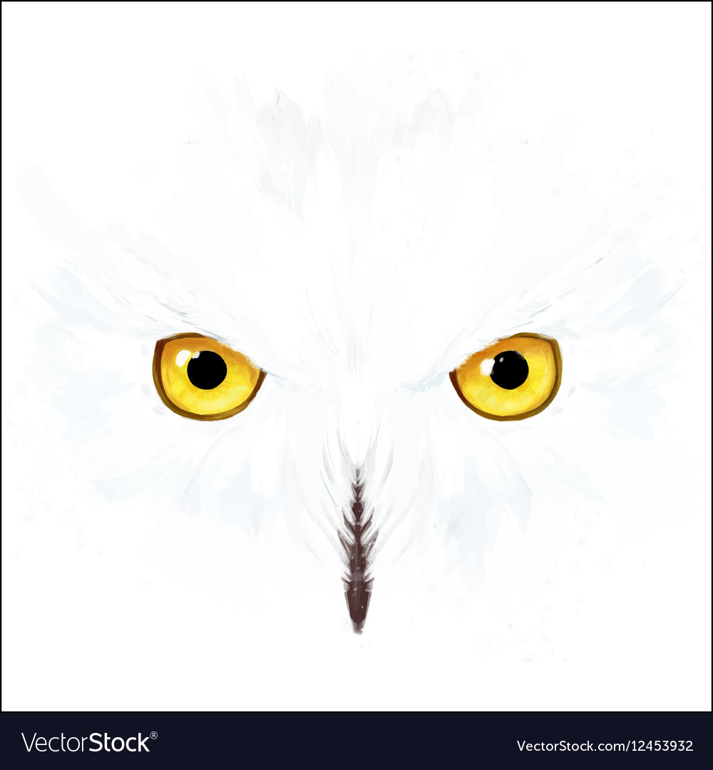 snowy owl eyes and face royalty free vector image