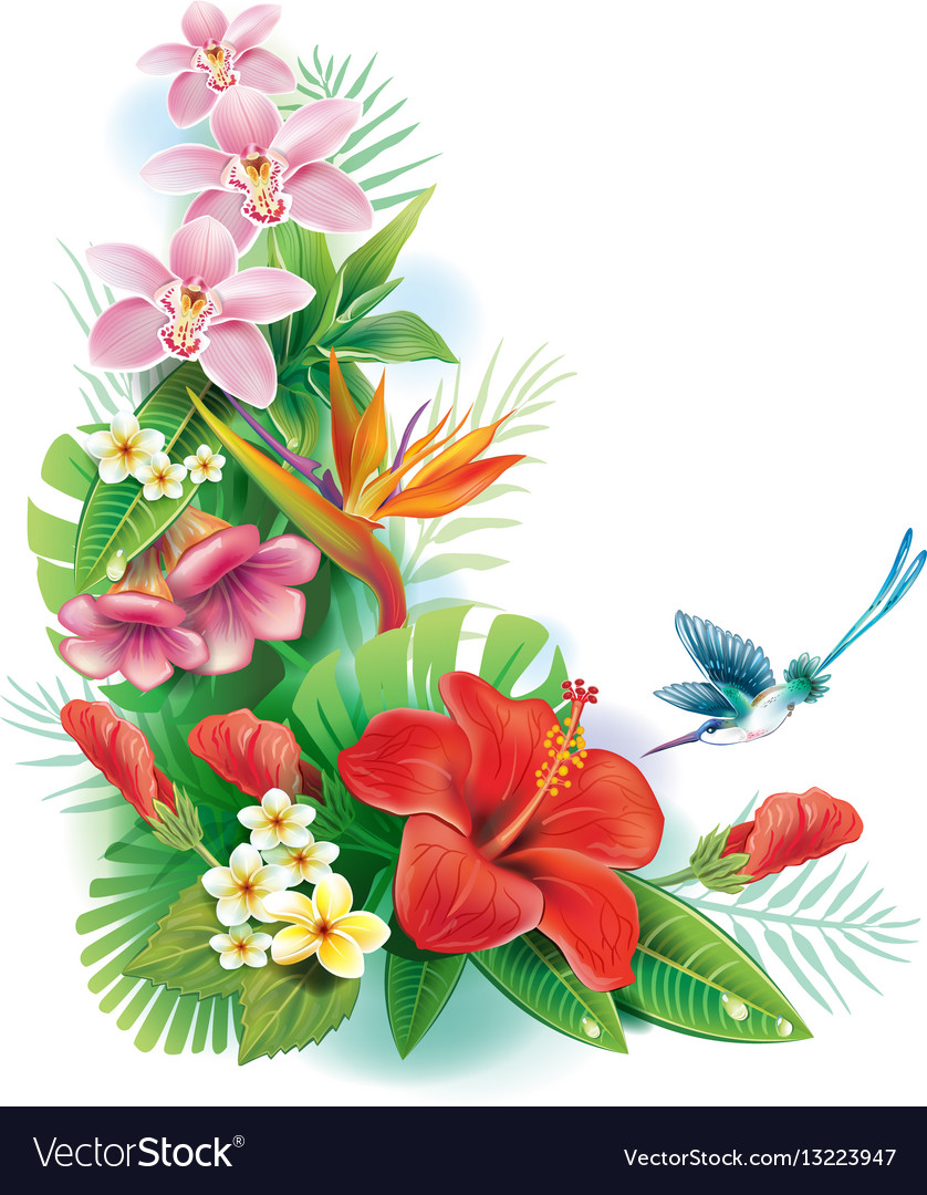 Tropical Flower On Koh Samui Thailand: Arrangement From Tropical Flowers Royalty Free Vector Image