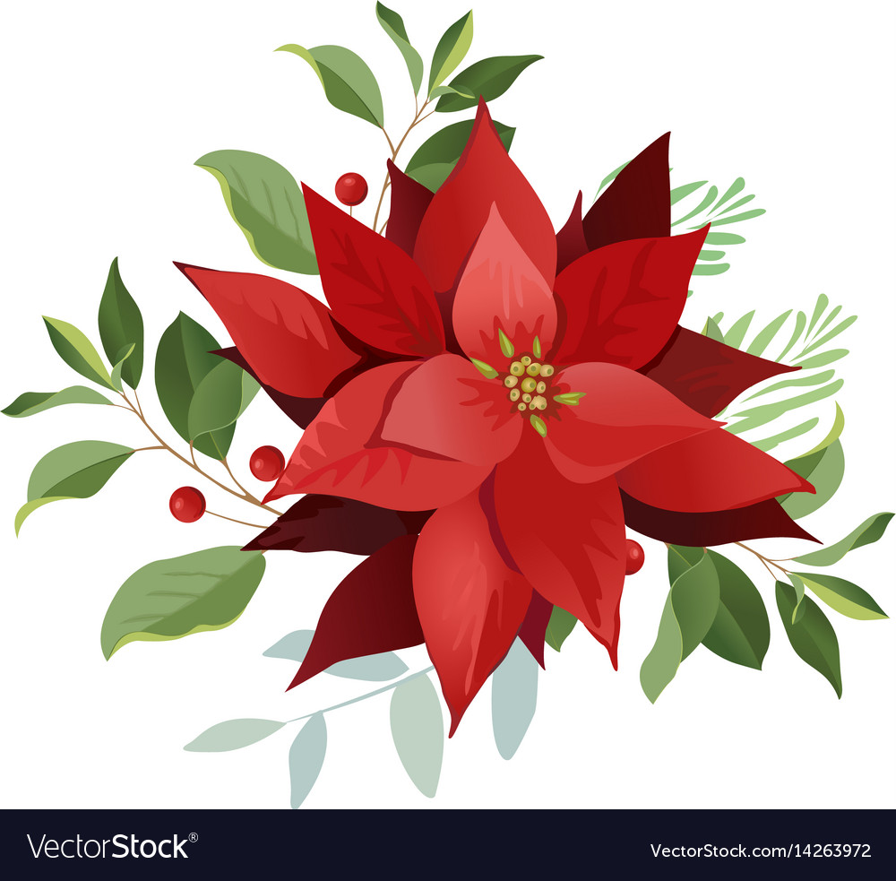 Christmas Poinsettia Royalty Free Vector Image