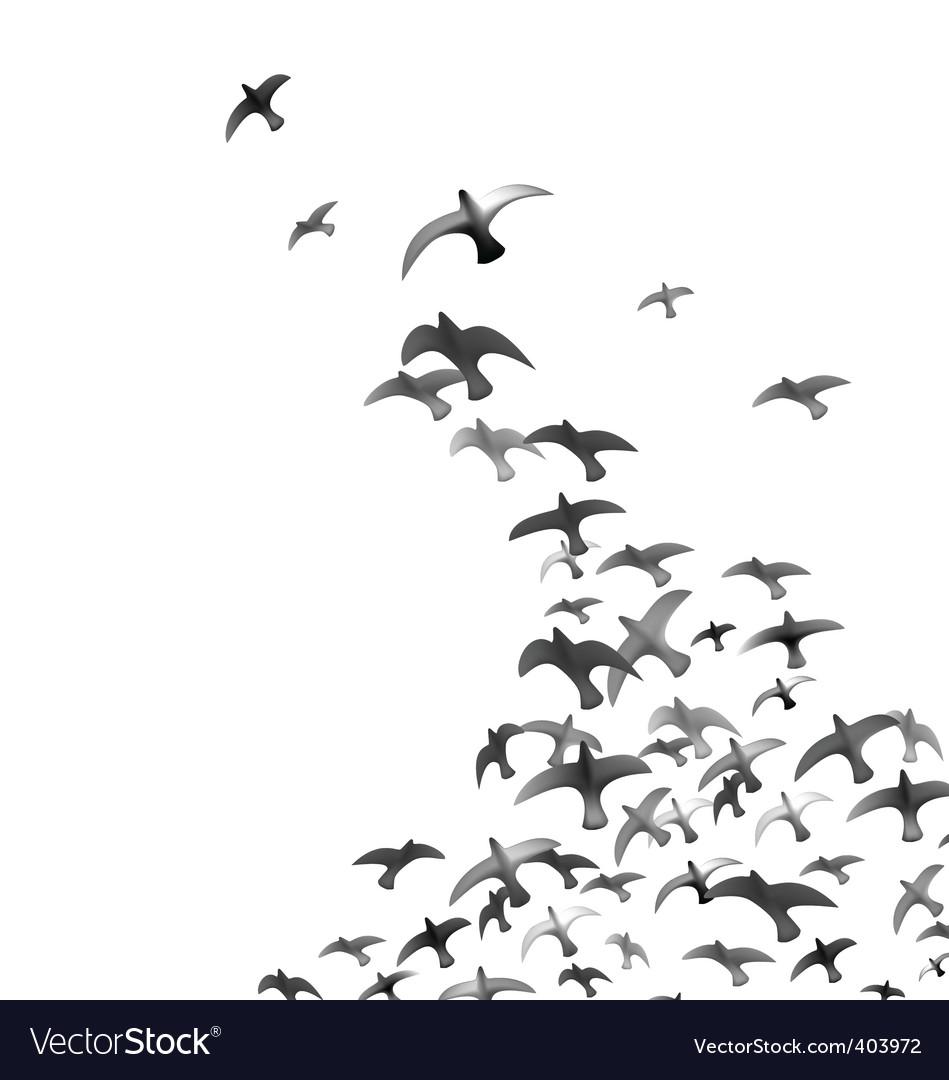 Flying birds vector image