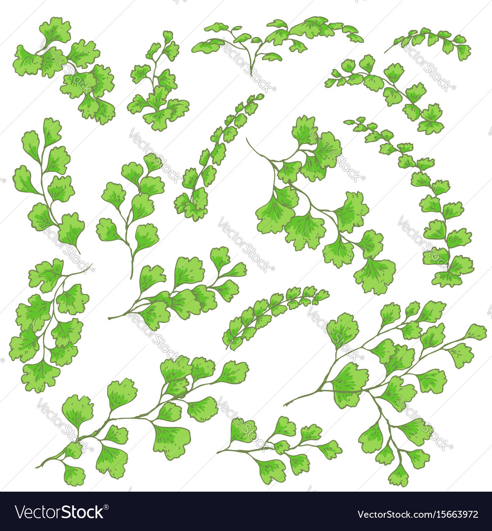 Green fern leaves sketch